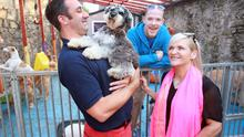 Flumpy says goodbye to his friends at Mutt Ugly as he is collected by owners Melanie and Trevor after spending the day with Dave, the manager at doggy daycare centre in Ranelagh
