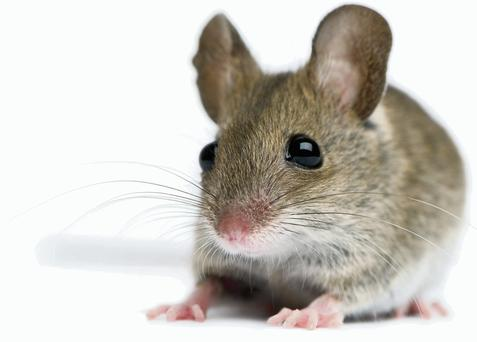 Rats and mice are a common problem for householders in the summer months.