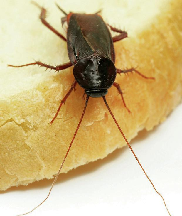 Top 10 Unwelcome House Pests And How To Evict Them