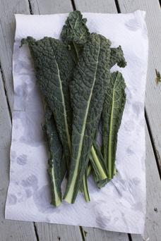 Cavolo nero - tall, svelte and suave.