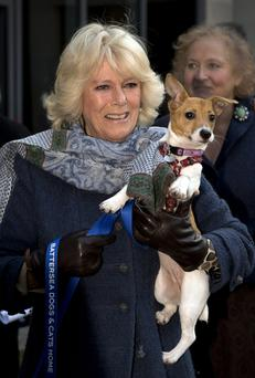 Royal makeover: Camilla, the Duchess of Cornwall, during a visit to Battersea Dogs Home