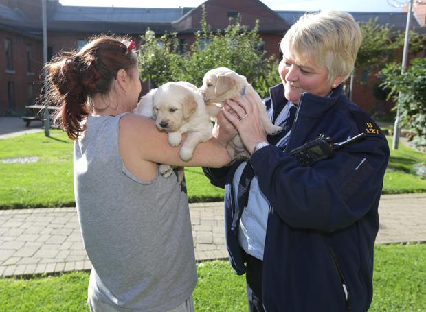 Prisons and Puppies: 'The dogs don't judge us the way people