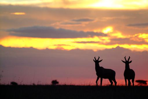 Open space: A pair of topi antelope at sunset on the Ol Kinyei Conservancy, an 18,700-acre wilderness set aside as an exclusive wildlife sanctuary in the Serengeti-Mara ecosystem
