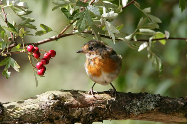A home-made bird feeder is ideal for birds such as the robin.
