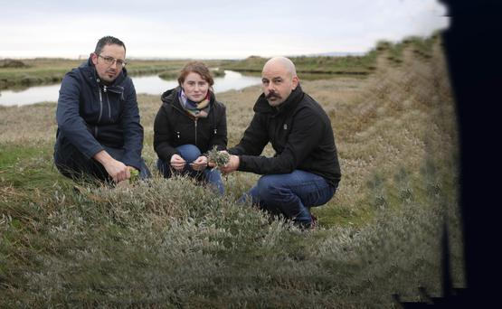 Niall O'Sullivan, left, chef at Bang restaurant and Paul Quinn, from the Three Q's restaurant in greystones with journalist, Meadhbh McGrath, foraging for Sea beet in Kilcoole, Wicklow. Photo: Damien Eagers.