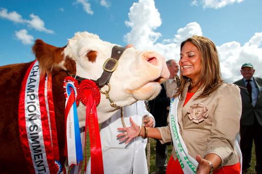 There's always plenty of two- and four-legged glamour at Tullamore Show. Photo: Pat Moore
