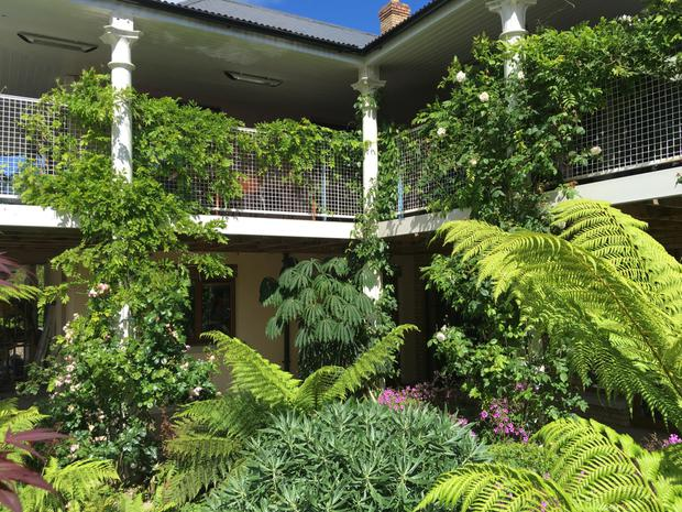 high hopes roses and wisteria clambering over verandah - Climbing Plants