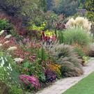 Mixed perennials and ornamental grasses in late summer border, September