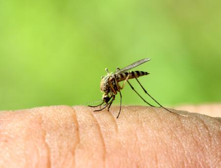 Common mistake: Many of us ignore the risks of mosquitoes carrying deadly illnesses