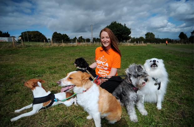 Anna Kavanagh gets plenty of opportunities to walk and socialise dogs through her DSPCA voluntary work. Photo: Caroline Quinn