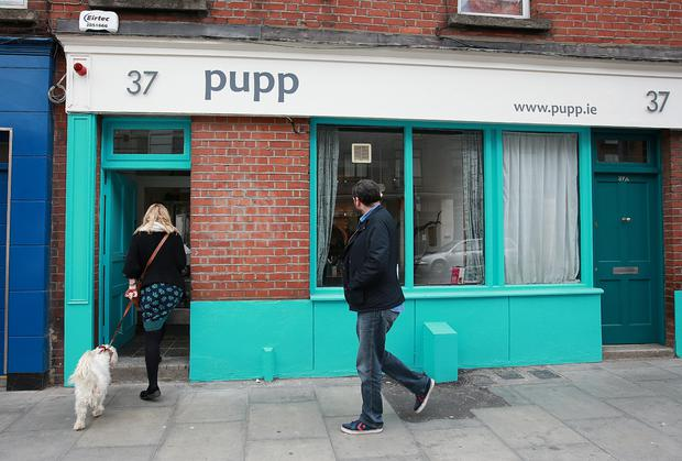 Pupp café, where dogs are more than welcome. Photo: Frank Mc Grath