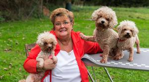 Control: Carmel McCarthy, who suffers with COPD, with her dogs Misty, Abby and Cassie Photo: Natasha Barton