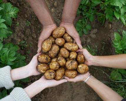 Grants are available from GIY for community food projects