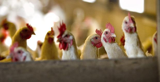 Two more cases of bird flu in Ireland brings our total up to eight.