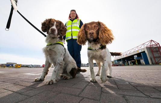 Tales to tell: Dog handler Shirley Ffrench with customs dogs Alfie (cash & tobacco), and Defor (cash & drugs) Photo: Patrick Browne