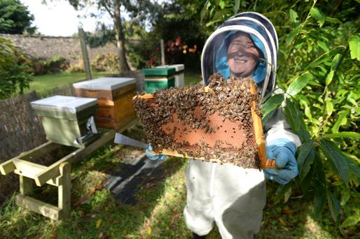 Honey trap: Beekeeper Rose Breslin with her beehives in Woodtown House in Dublin. Photo: Justin Farrelly
