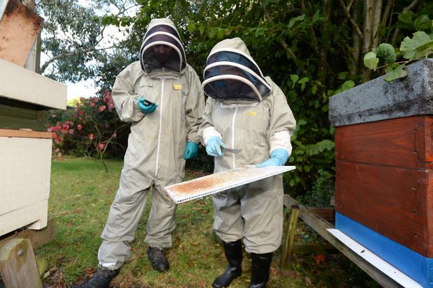 Beekeeper Rose Breslin pictured with her beehives and Eoin Butler. Photo: Justin Farrelly