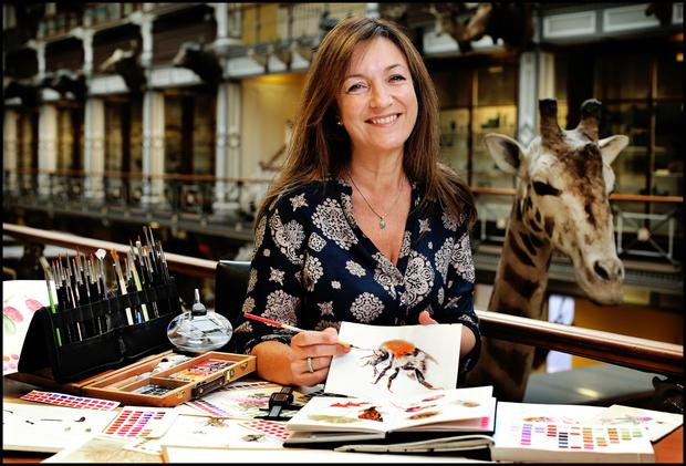 The bee's knees: illustrator Shevaun Doherty at the Natural History Museum or 'Dead Zoo'. Photo: Steve Humphreys