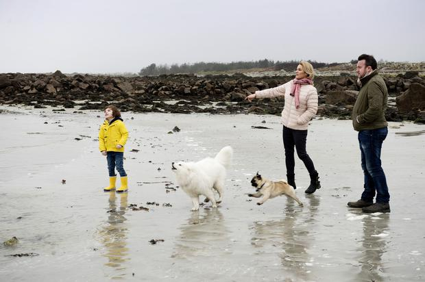 Suzanne McClean and Gary Monroe with son Ruben and dogs Juno and George. Photo: Andrew Downes