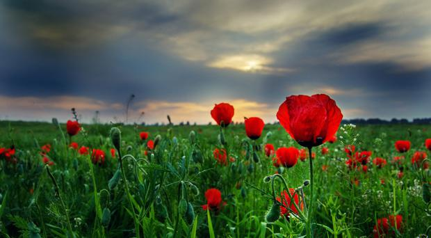 Sombre sunsets of Flanders Fields