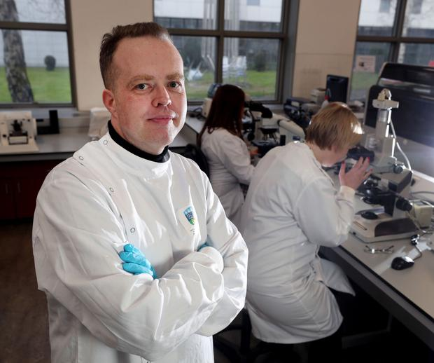 Professor William Gallagher, a cancer researcher at UCD. Photo: Damien Eagers