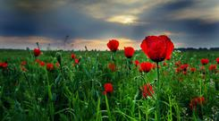 The lapel flower or the absence of one shouldn't stop us remembering the fallen from all backgrounds. Stock image