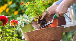 You can create your own personal paradise through planting