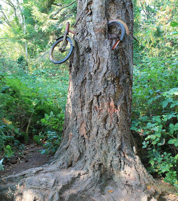 TREEMENDOUS: The bike tree on Vashon Island, Washington