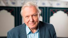 Wild at heart: David Attenborough will present a new BBC wildlife series this year at the age of 92