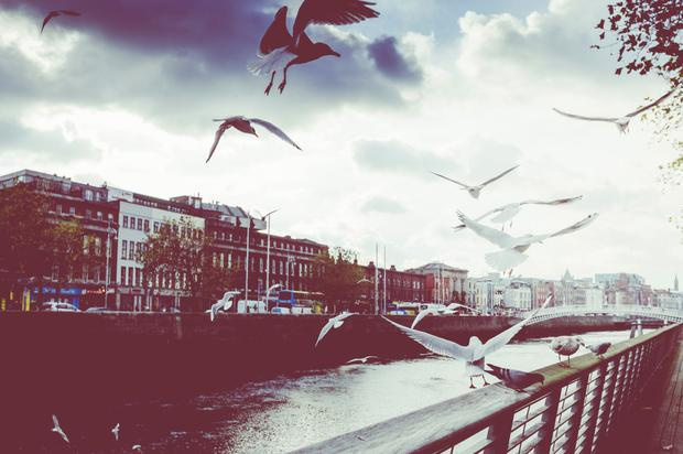 b8ab523440f39 Short story: Bird on a Wire - Independent.ie