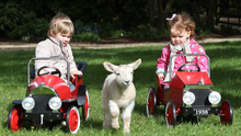Little ones can get hands-on experience with small animals at Dundrum's Airfield Estate