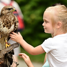 Off to a flyer: Get up close to a falcon at Well's House