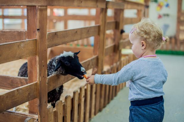Families can visit the woodland adventure playground at Huntington Castle, Co Carlow, to meet baby lambs, sheep and calves during the castle's Easter event, running from March 31 to April 2.