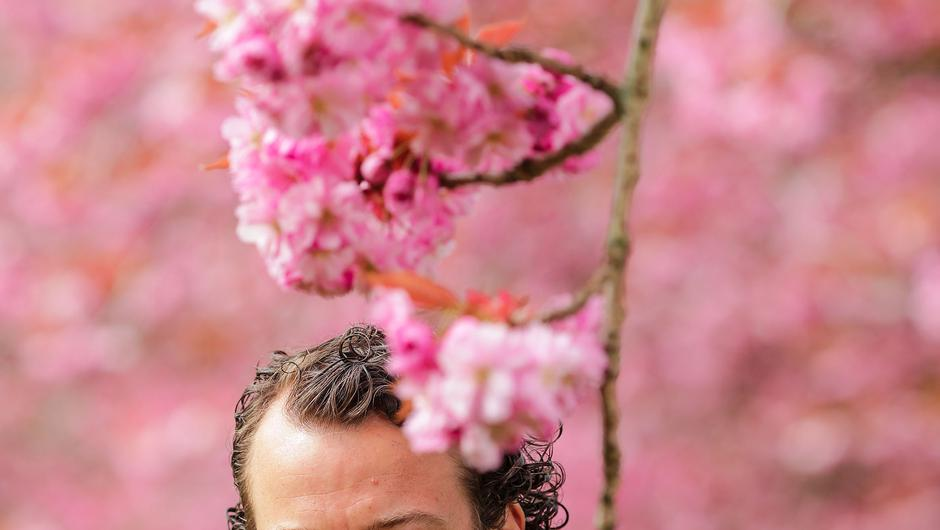 Inventive: Cúan Greene gathering cherry blossom petals to use in his cooking. Photo: Gerry Mooney