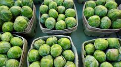Freshly grown brussel sprouts on display at a farmer's market.
