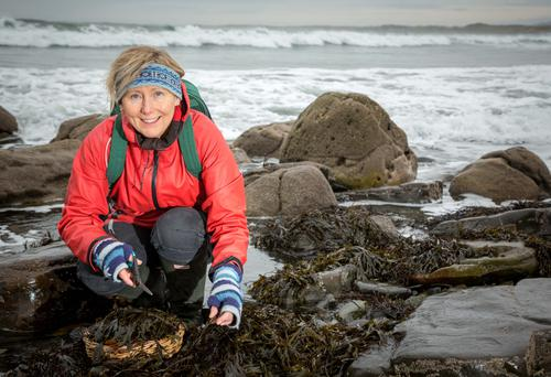 Making the cut: Prannie Rhatigan picks seaweed near her home on Streedagh Beach, Co Sligo. Photo: James Connolly