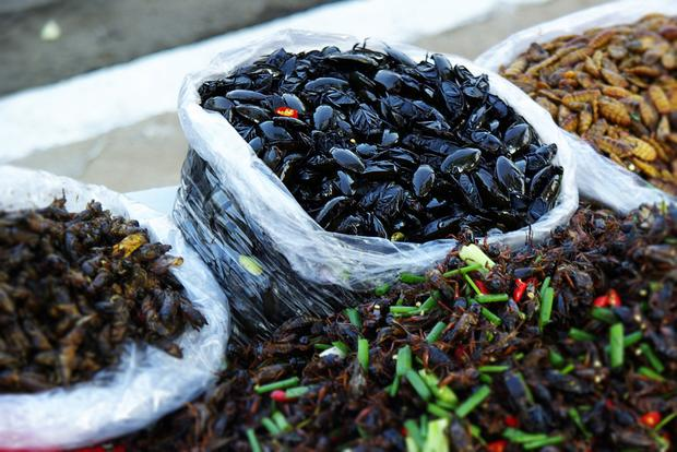 Bug me: Edible insects