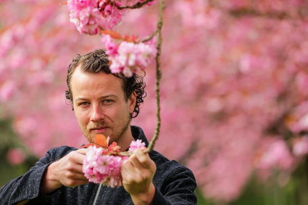 Inventive: Cúan Greene gathering cherry blossom to use in his cooking. Photo: Gerry Mooney