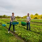 Grow your own: Jack and Theo Kirwan on their Kildare Farm