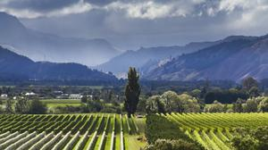Southern charm: Marlborough has become one of the world's top winemaking regions