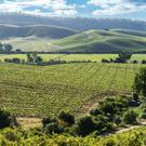Perfectly positioned: Chile's Casablanca region is particularly suited to growing Pinot Noir grapes