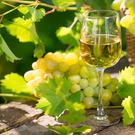 Dry whites bring the garden into the home, no matter what the weather