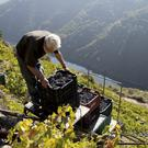 Panoramic harvest: Ribeira Sacra DO, or 'sacred riverside', is attracting a new wave of winemakers