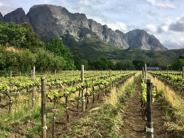 Choc 'n' roll: Boekenhoutskloof winery which makes a favourite wine of Bono's