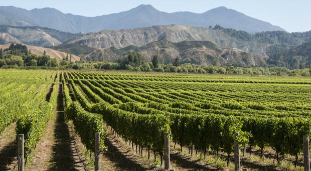 Mad about Marlborough: Wairau is one of two main valleys in the region