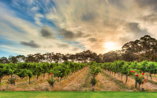 Way out west: The Margaret River area, south of Perth, is one of Australia's most successful wine regions