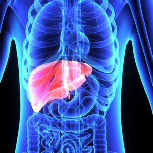 A high level of iron in the body can strain the liver