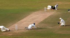 Insects stop play in a test match in Sri Lanka