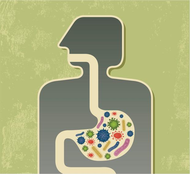 The gut is the body's sensitive 'second brain'