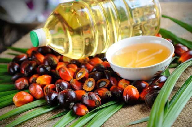 Demand: 62 million tons of palm oil was consumed globally in 2015